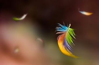 arcobaleno piuma